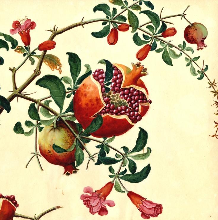 pomegranate art illustris. Black Bedroom Furniture Sets. Home Design Ideas